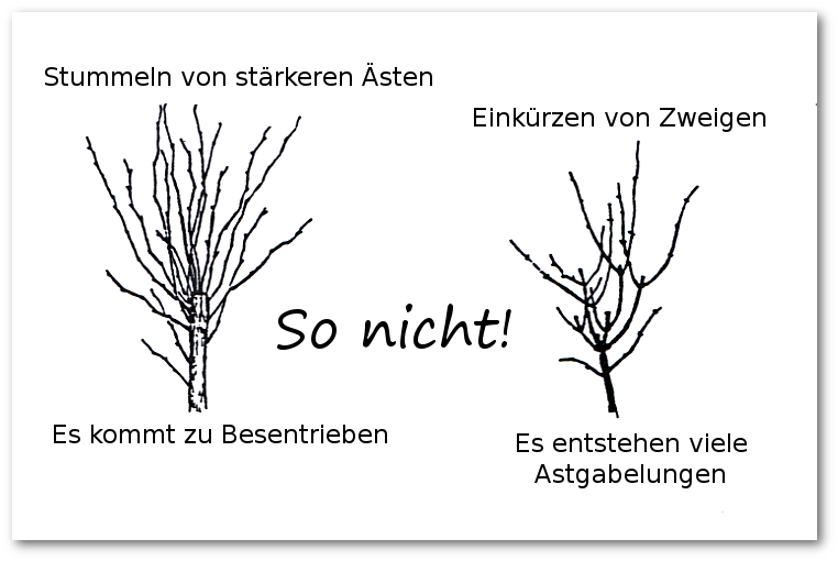 Bäume schneiden  Der Baum muss weg - SPD - Offene Liste Merdingen